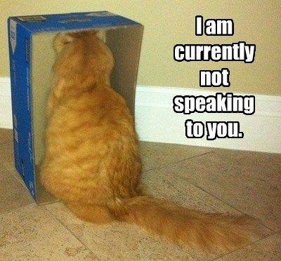 sulky cat